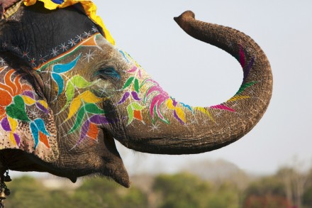 Inde_Dehli_Jodpur_Benares_Bikaner_Taj_Mahal_Udaipur_17