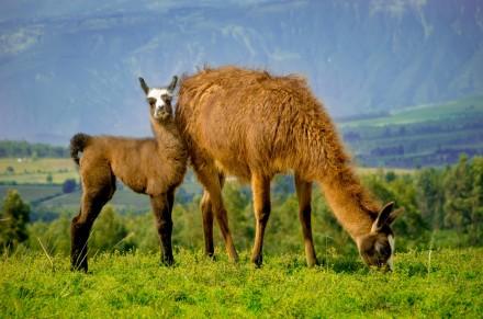 Perou_Lima_Cuzco_Arequipa_Ica_Nazca_Puno_Lac_Titicaca_Machu_Picchu32